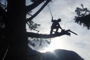Baumpflegezentrale Südtirol